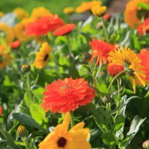 Online Flower Farming Workshops